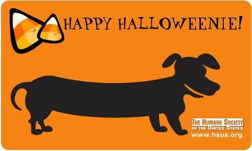 Image Result For Dog Flyer