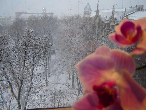 Lumipyry keskipäivällä