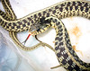 "<a href=""http://www.flickr.com/photos/furryscalyman/293508049/"">Photo of Thamnophis sirtalis by Matt Reinbold</a>"