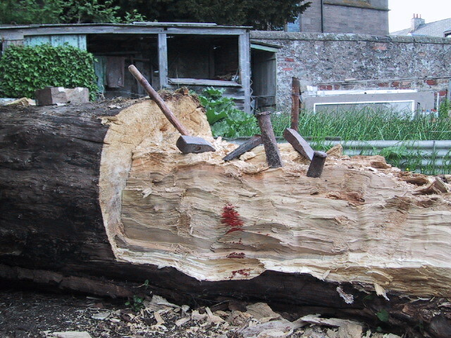 Blood is spilled chopping tree