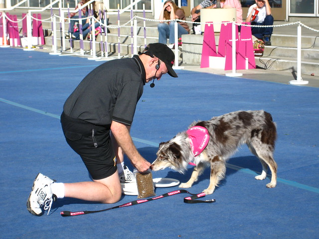 Trained Border Collie Dogs For Sale