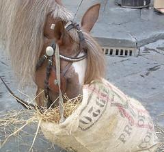 art(0.0), donkey(0.0), mane(1.0), rein(1.0), halter(1.0), bridle(1.0), pack animal(1.0), horse tack(1.0),