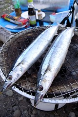 mackerel(0.0), trout(0.0), forage fish(0.0), bonito(0.0), sardine(0.0), fish(1.0), fish(1.0), seafood(1.0), pacific saury(1.0), sauries(1.0), oily fish(1.0), food(1.0), milkfish(1.0),