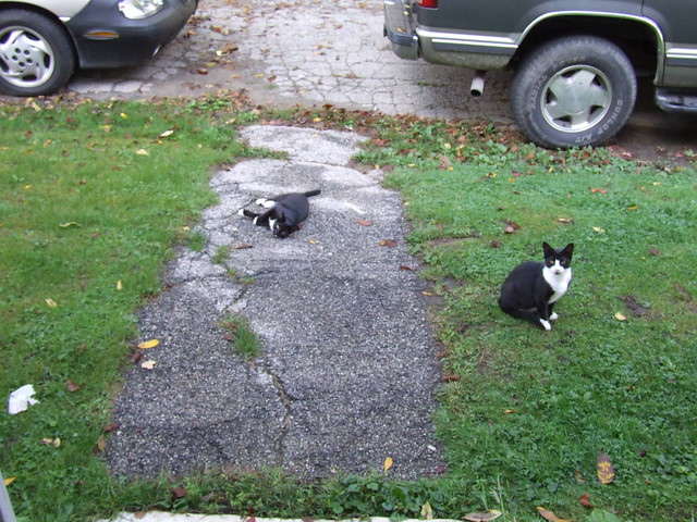 Tux & Oreo rolling on the ground