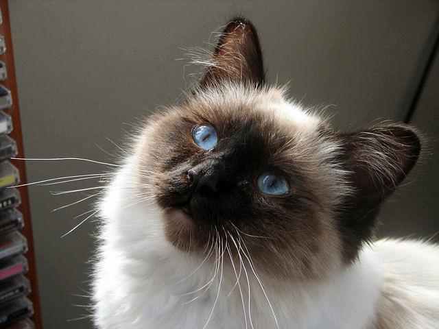 Ol'Blue Eyes