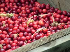 Cranberries por GFHarris