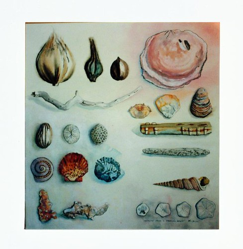objects from a tropical beach