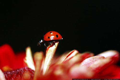 ladybug on top    MG 2740