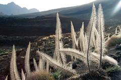 Tenerife 2006