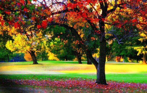 Colors of Autumn!!