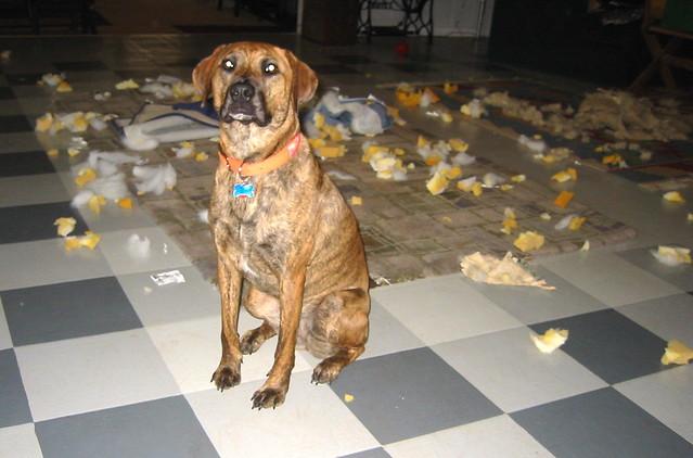 Image Result For Dog Left In