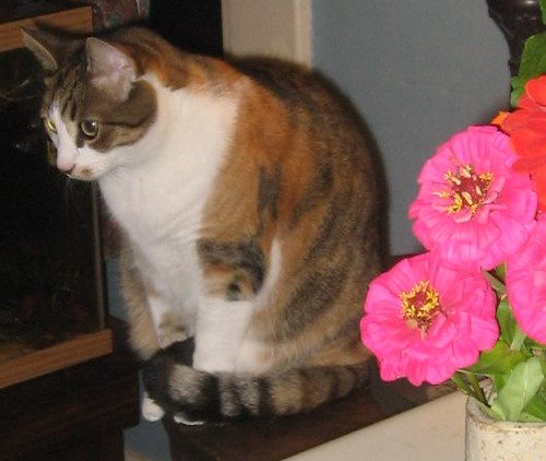 lucy and zinnias