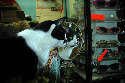 Thrift shop cat