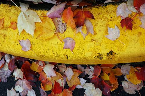Microsoft Curb Leaves - view large by Wonderlane
