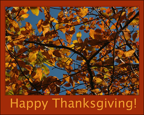 Happy Thanksgiving by Alida's Photos