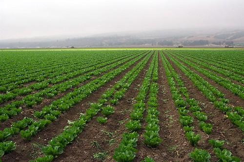california geotagged lettuce mission salinasvalley missionsoledad missionnuestrasenoradelasoledad abigfave geolat36404402 geolon121356069