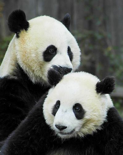 Mei & Tai
