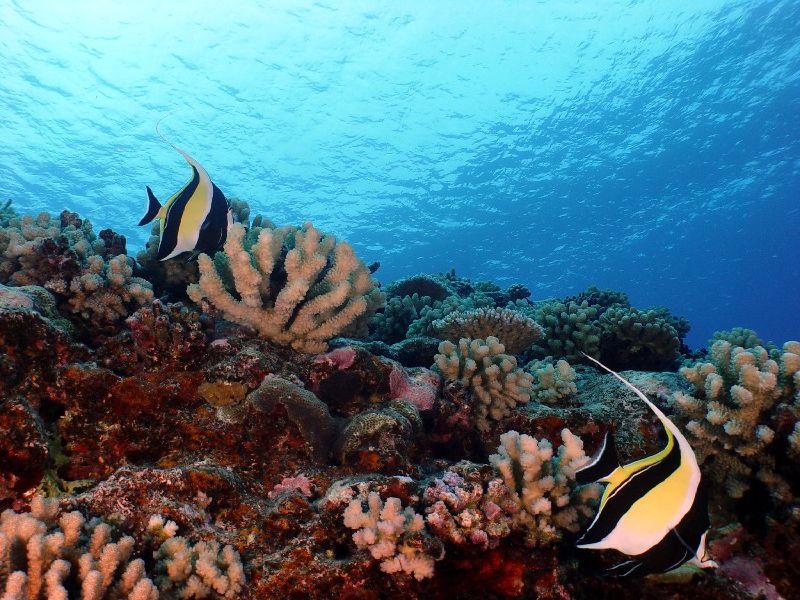 Ídolos Moros en el arrecife