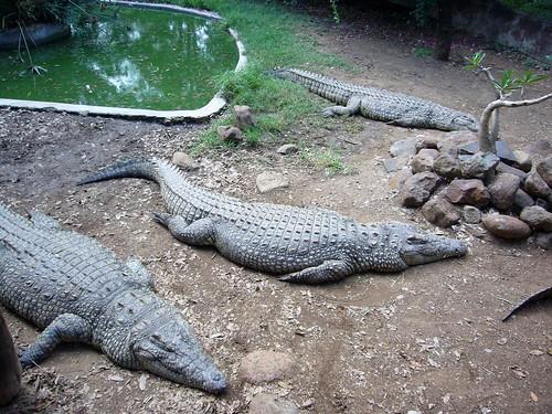 Meserani Snake Park