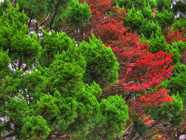 Photo:Red in green (HDR) By EugeniusD80
