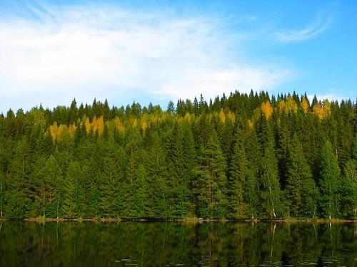 summer lake reflection forest penttilänmäki pieniläänä