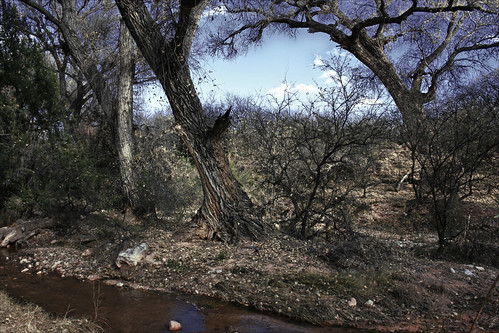 Dead Horse Ranch Park by Juli Kearns (Idyllopus)