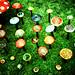 magic mushrooms from lomo by poppy smiles