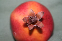 flower(0.0), plant(0.0), produce(0.0), pomegranate(1.0), macro photography(1.0), fruit(1.0), food(1.0),
