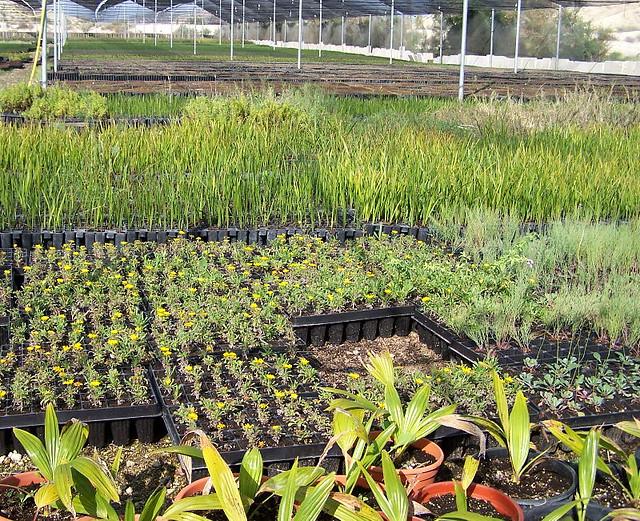Vivero de plantas autóctonas