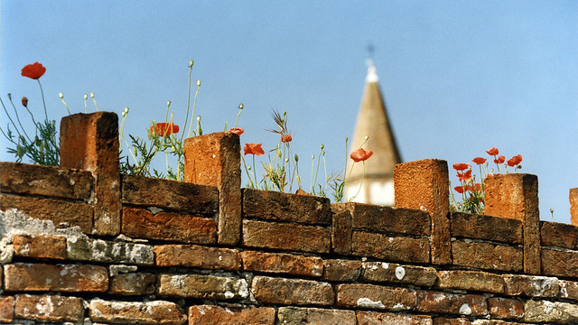 Wall with poppies