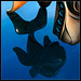 Orca by sharply_done