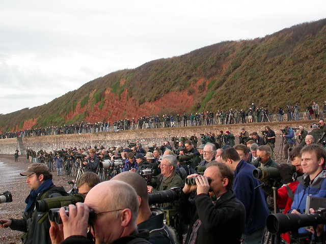 twitchers, Dawlish, 12-Nov-06