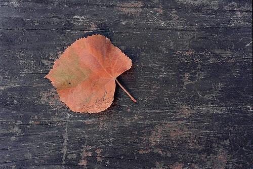 autumn whisper
