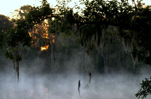 river swamp dawn morning sun sc peedee lowcountry fog mist georgetown air vapor chemistry physics light waves rising humid mystery wet water star muss tillandsia bromeliaceae spanish tree branches twigs botany