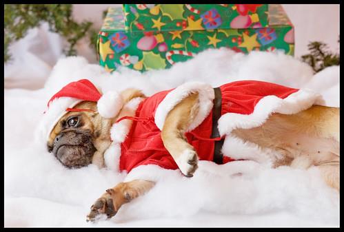 Yoda - Christmas Pug Portrait