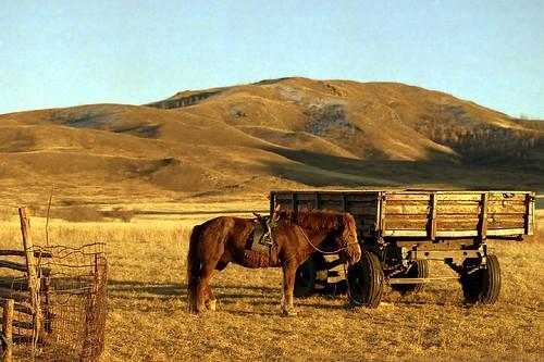horse film pentax mongolia mx nomads s100 pentaxmx eba bulgan eba317 hishigöndör mongolianbeauty eba317theworldaccordingtome hirofumiebata ボルガン県 ヒシグ・オンドゥル郡