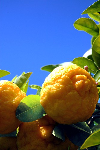 Lemons!! by visualdensity