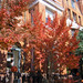 November in Kalorama