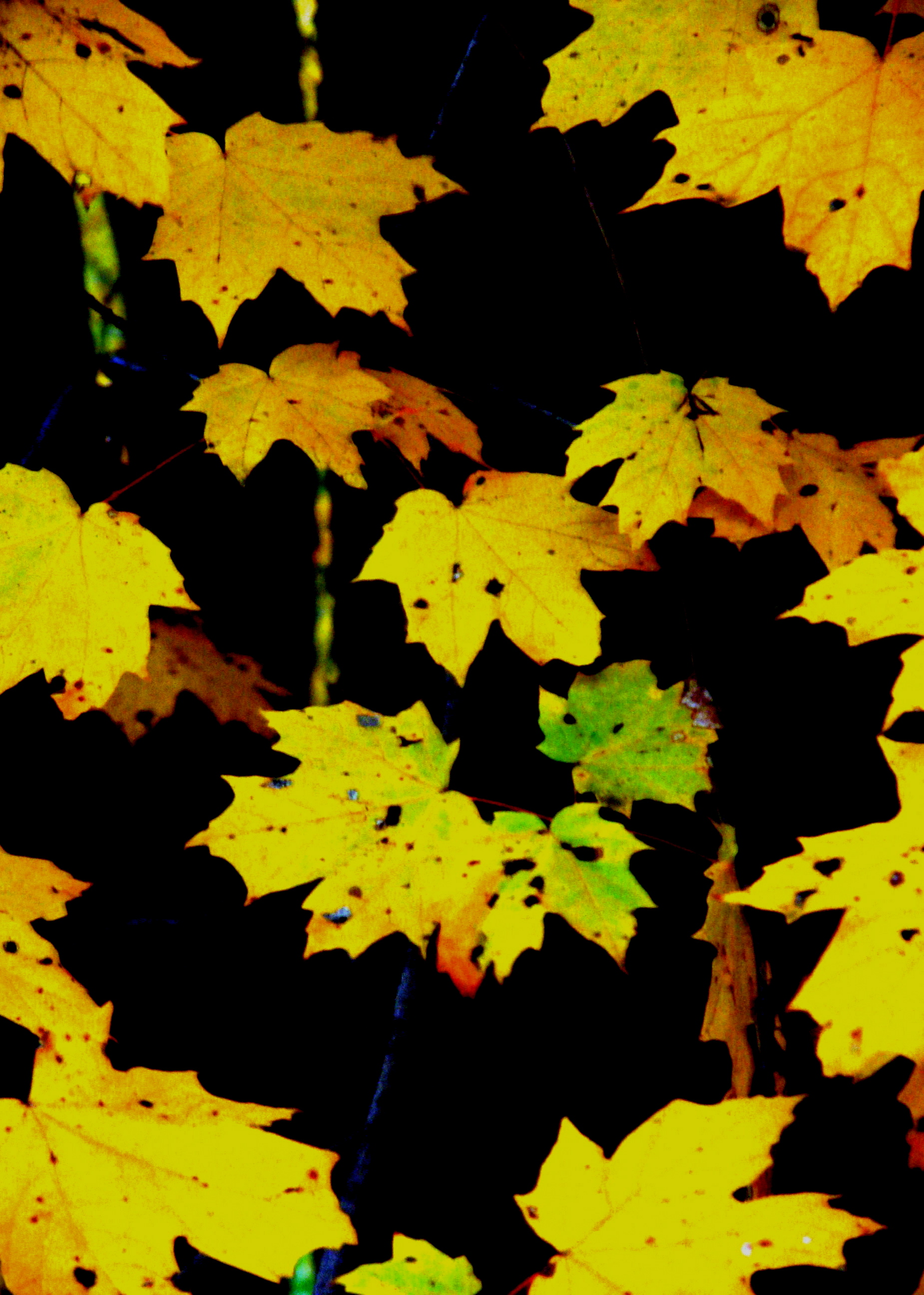 Autumn Leaves Rotary Park Huntington West Virginia Octo Flickr Photo Sharing