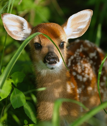 Funny Animals: Cute Wild Baby Animals  Funny Animals: ...