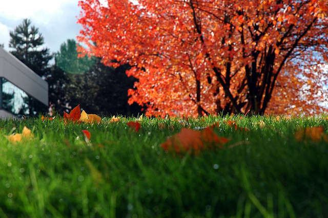 Red tree with green lawn