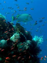 K41 Dive Site