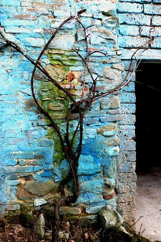 Surreal grape(vine)