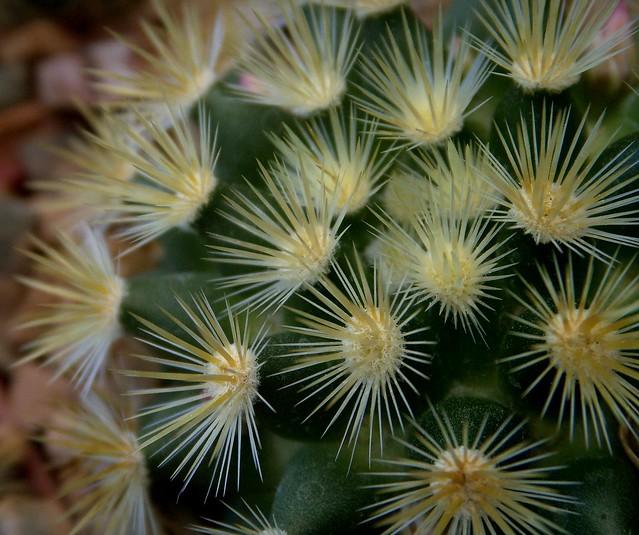 Starring: A Cactus Macro