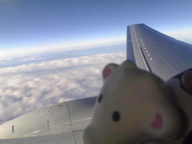 Squishy Cow on WestJet Back to Vancouver Flickr - Photo Sharing!
