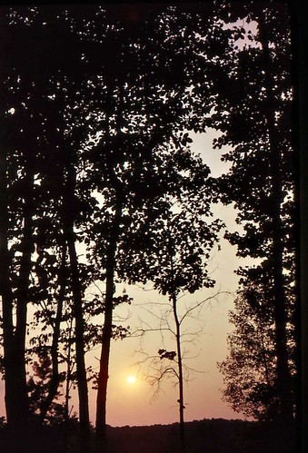 trees sunset usa beautiful silhouette geotagged ilovenature northcarolina lakenorman johndalkin heavensgatejohn geolat35438575 geolon80914307