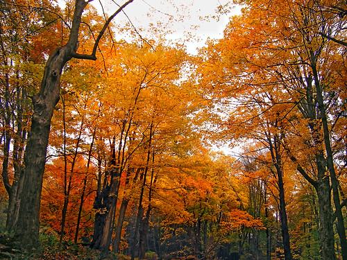 关于temperate forest【温带森林】的简介,中英皆可.
