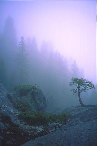 Sunset Rock in Fog, Sequoia National Park