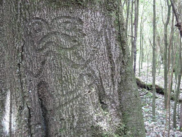 Moriori tree carving rosie wayper flickr
