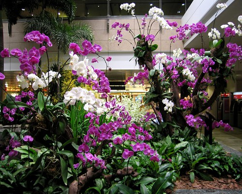Orchids in airport
